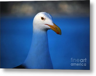 Blue Seagull Metal Print by Debra Thompson