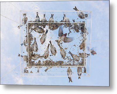 Blue Skies Above The Bird Feeder Metal Print