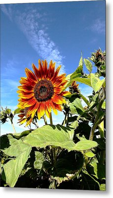 Blue Sky And Sun Flower Metal Print