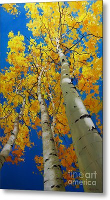 Blue Sky And Tall Aspen Trees Metal Print
