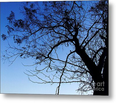 Metal Print featuring the photograph Blue Sky by Andrea Anderegg