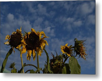 Metal Print featuring the photograph Blue Sky Buddies by Brian Boyle