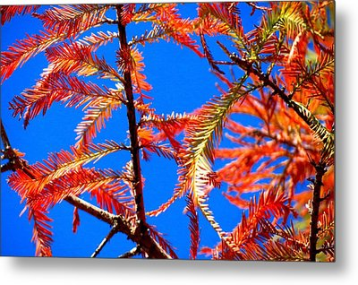 Metal Print featuring the photograph Blue Sky Sunday by David  Norman