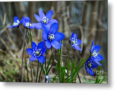 Blue Springtime Metal Print