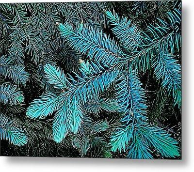Blue Spruce Metal Print by Daniel Thompson