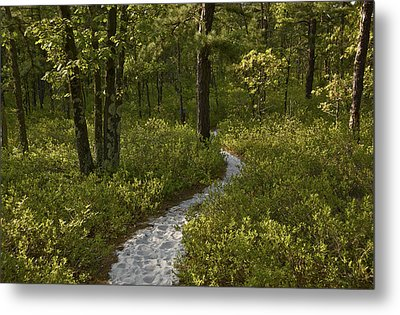 Blue Trail Batsto Metal Print by Greg Vizzi