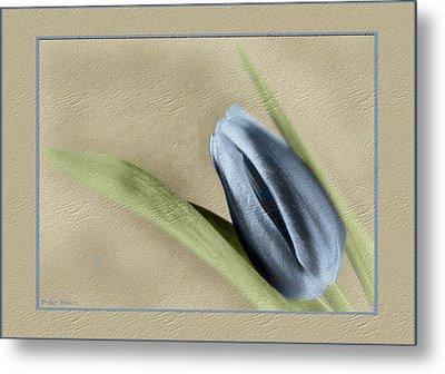 Blue Tulip Metal Print by Philip  Butler