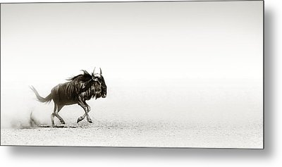 Blue Wildebeest In Desert Metal Print