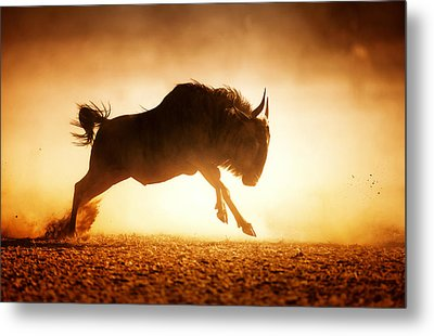 Blue Wildebeest Running In Dust Metal Print