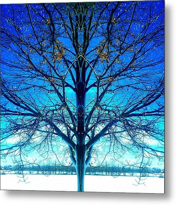 Metal Print featuring the photograph Blue Winter Tree by Marianne Dow