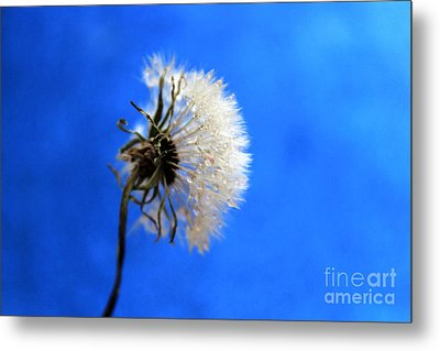 Blue Wish Metal Print by Krissy Katsimbras