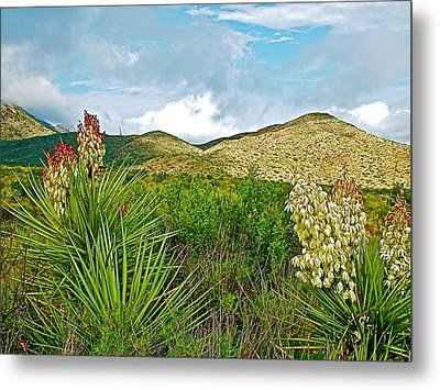 Blue Yucca And Chisos Mountains In Big Bend National Park-texas Metal Print by Ruth Hager