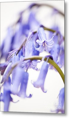 Bluebell Abstract II Metal Print