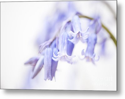 Bluebell Abstract IIi Metal Print