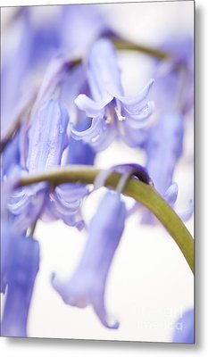 Bluebell Abstract Iv Metal Print
