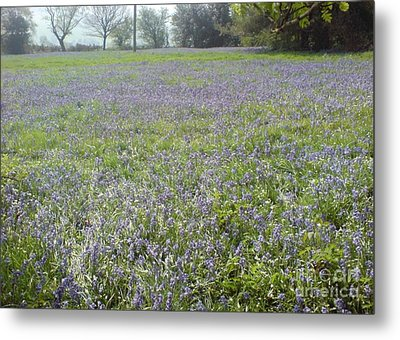Metal Print featuring the photograph Bluebell Fields by John Williams