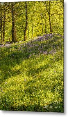 Bluebell Flowers Metal Print