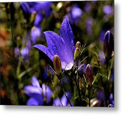 Bluebell Metal Print by Rona Black
