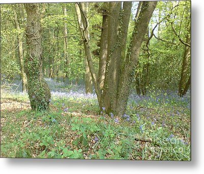 Metal Print featuring the photograph Bluebell Wood by John Williams