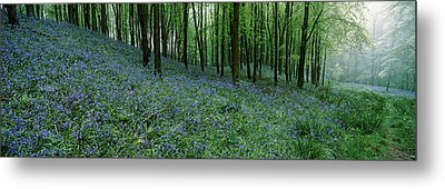 Bluebell Wood Near Beaminster, Dorset Metal Print by Panoramic Images