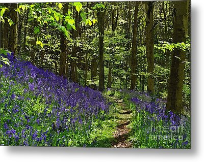 Metal Print featuring the photograph Bluebell Woods Photo Art by Les Bell