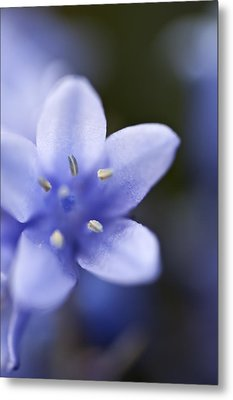 Bluebells 4 Metal Print by Steve Purnell