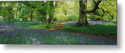 Bluebells In A Forest, Thorp Perrow Metal Print by Panoramic Images
