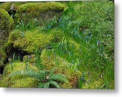 Metal Print featuring the photograph Bluebells  by Marilyn Wilson