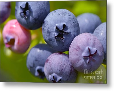 Blueberries Metal Print by Sharon Talson