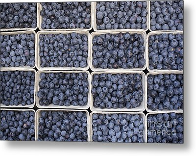Blueberries Metal Print by Tim Gainey