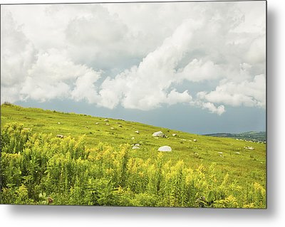 Blueberry Field And Goldenrod With Dramatic Sky In Maine Metal Print by Keith Webber Jr