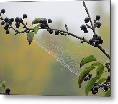 Metal Print featuring the photograph Blueberry Web by Nikki McInnes