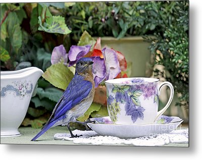 Bluebird And Tea Cups Metal Print