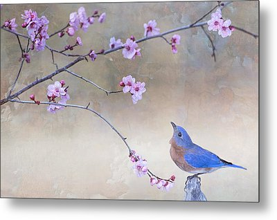 Bluebird And Plum Blossoms Metal Print by Bonnie Barry