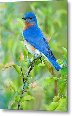 Bluebird Joy Metal Print
