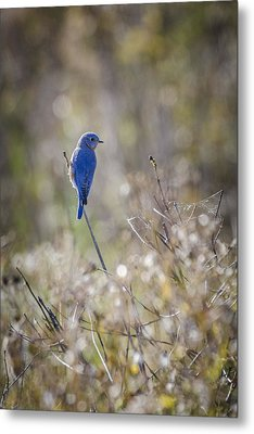 Bluebird Meadow Metal Print