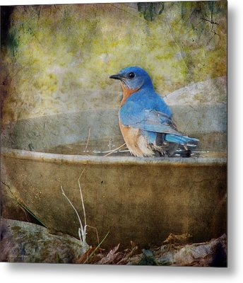 Bluebird Metal Print by Melissa Bittinger
