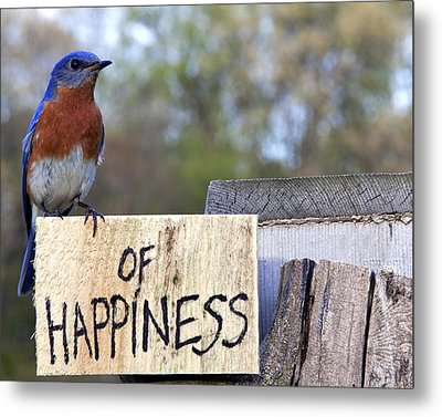 Metal Print featuring the photograph Bluebird Of Happiness by John Crothers