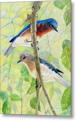 Bluebird Pair Metal Print by Marilyn Smith