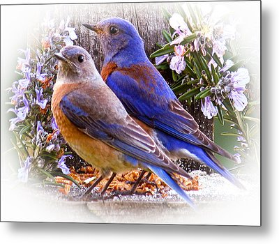 Bluebird Wedding Metal Print by Jean Noren