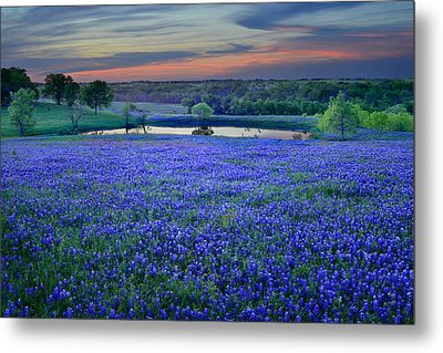Bluebonnet Lake Vista Texas Sunset - Wildflowers Landscape Flowers Pond Metal Print by Jon Holiday