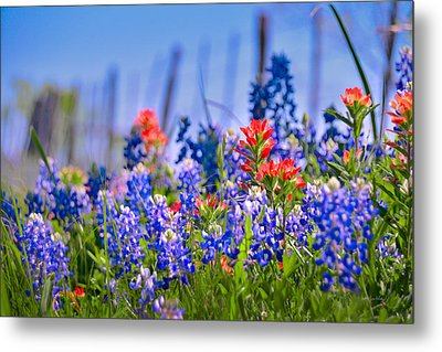 Metal Print featuring the photograph Bluebonnet Paintbrush Texas  - Wildflowers Landscape Flowers Fence  by Jon Holiday