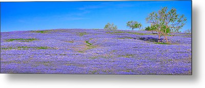 Metal Print featuring the photograph Bluebonnet Vista Texas  - Wildflowers Landscape Flowers  by Jon Holiday