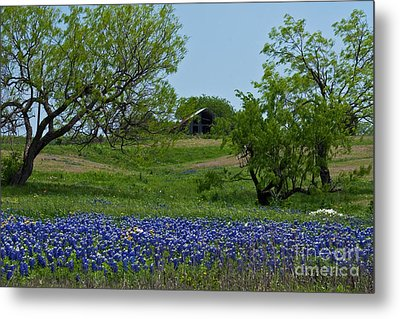 Bluebonnets And Old Barn Metal Print by Lisa Holmgreen