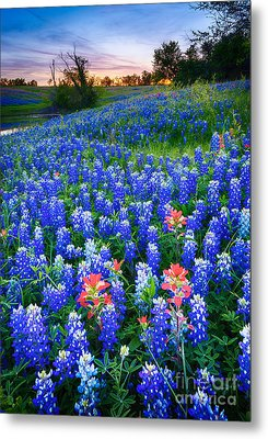 Bluebonnets Forever Metal Print by Inge Johnsson