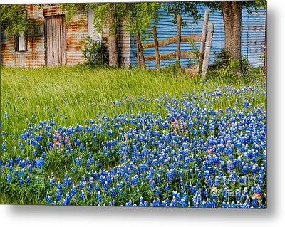 Bluebonnets Swaying Gently In The Wind - Brenham Texas Metal Print by Silvio Ligutti