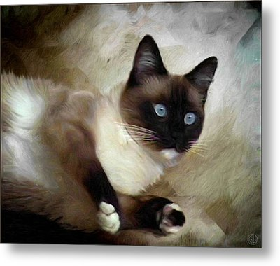 Blueeyed And Brownmasked Metal Print by Gun Legler
