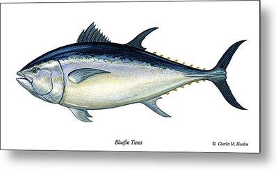 Bluefin Tuna Metal Print by Charles Harden