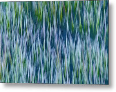 Bluegrass  Metal Print by Sherri Meyer