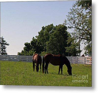 Bluegrass Summer Day Metal Print by Roger Potts